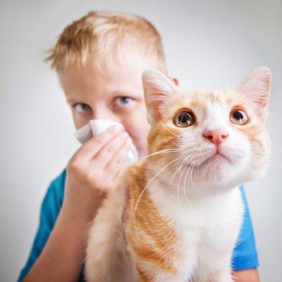 Pet Treatments